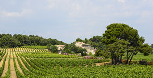 Country house near Montpellier. (Herault, Languedoc-Roussillon, France) at summer, with vineyard Royalty Free Stock Images