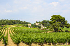 Country house near Montpellier. (Herault, Languedoc-Roussillon, France) at summer, with vineyard Royalty Free Stock Image