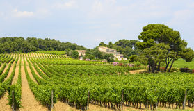 Country house near Montpellier. (Herault, Languedoc-Roussillon, France) at summer, with vineyard Royalty Free Stock Photos