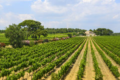 Country house near Montpellier. (Herault, Languedoc-Roussillon, France) at summer, with vineyard Stock Photos