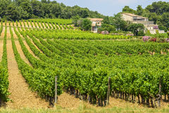 Country house near Montpellier. (Herault, Languedoc-Roussillon, France) at summer, with vineyard Stock Photography
