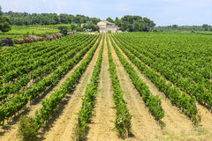 Country house near Montpellier. (Herault, Languedoc-Roussillon, France) at summer, with vineyard Stock Images