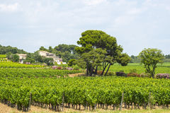 Country house near Montpellier. (Herault, Languedoc-Roussillon, France) at summer, with vineyard Royalty Free Stock Photography