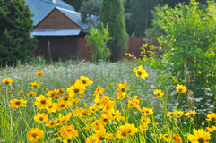 Country house, view of the yard where beautiful yellow flowers grows Royalty Free Stock Photo
