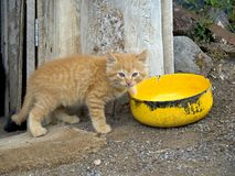Country kitten Stock Images