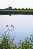 Country lake with flower Stock Images