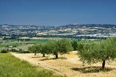 Landscape near Sant`Elpidio a Mare Marches, italy Stock Photo