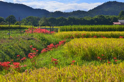 Country landscape in autumn in Japan. Royalty Free Stock Images