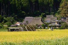 Country landscape in autumn in Japan. Stock Photo