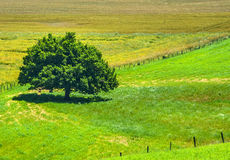 Country landscape in Aveyron (France) Royalty Free Stock Photos