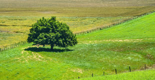 Country landscape in Aveyron (France) Stock Photography