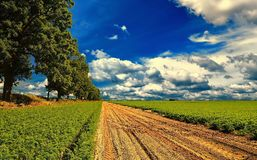 Country landscape. Royalty Free Stock Image