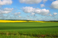 Country landscape with canola and wheat. Stock Photo