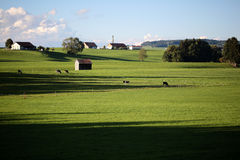 Country landscape with cows and farm Royalty Free Stock Photos