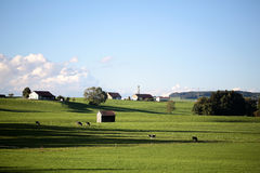 Country landscape with cows and farm Stock Images