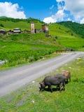 Country landscape in Davberi. Samegrelo-Zemo Svaneti, Georgia Royalty Free Stock Photo
