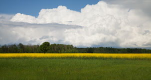 Country landscape. Stock Photos