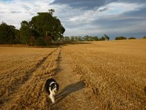 Country landscape of field after harvest Stock Photography