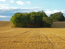 Country landscape of field after harvest Royalty Free Stock Image