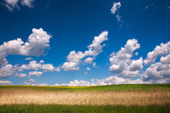 Country landscape of the field under blue sky Stock Image