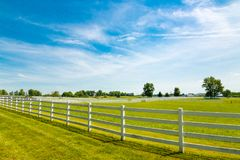 Country landscape. Green pastures of horse farms. Country summer landscape Royalty Free Stock Photography