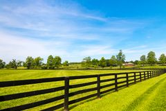 Country landscape. Green pastures of horse farms. Country summer landscape Royalty Free Stock Image