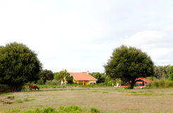 Country landscape with a horse and houses Stock Image