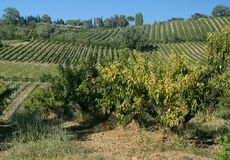 Landscape between Imola and Riolo Terme Emilia Romagna Royalty Free Stock Image