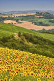Country landscape in Marches (Italy) Stock Image