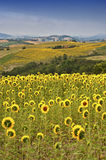 Country landscape in Marches (Italy) Royalty Free Stock Image