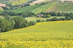 Country landscape in Marches (Italy) Stock Photography