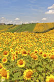 Country landscape in Marches (Italy) Royalty Free Stock Photography