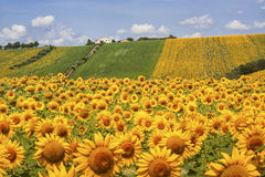 Country landscape in Marches (Italy) Royalty Free Stock Photo