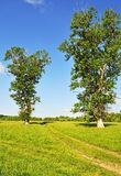 Country landscape with meadow and trees Royalty Free Stock Photos