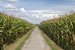 Country landscape near Morimondo (Milan) Royalty Free Stock Image