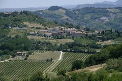 Landscape in Romagna at summer: vineyards Stock Photography