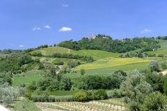 Landscape in Romagna at summer: vineyards Stock Photos
