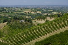 Landscape in Romagna at summer: vineyards Royalty Free Stock Photos