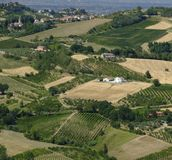 Landscape in Romagna at summer: vineyards Royalty Free Stock Image