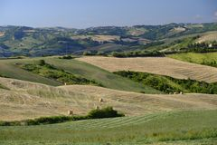 Landscape in Romagna at summer: fields Stock Photo