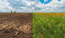 Country landscape at summer season Royalty Free Stock Photo