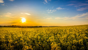 Country landscape Stock Photography