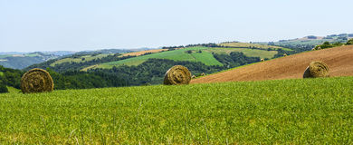 Country landscape in Tarn (France) Stock Image