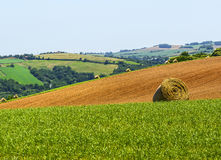 Country landscape in Tarn (France) Royalty Free Stock Image