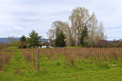 Country landscape and vine, Oregon. Stock Photos