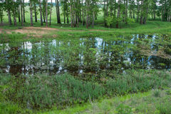 Country landscape whith reflection in the river, Bogolubovo, Rus Stock Photography