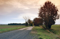 Country lane. Lined from bushes in the fall Stock Photography