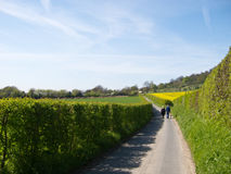 Country Lane Stock Photos