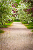 Country Lane. Surrounded by trees in spring bloom Stock Images
