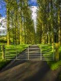 Country lane Royalty Free Stock Photo